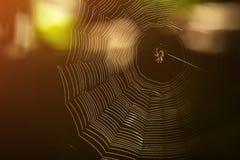 Eine Spinne im Netz stockbild
