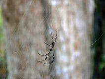 Eine Spinne und sein Netz Stockfoto