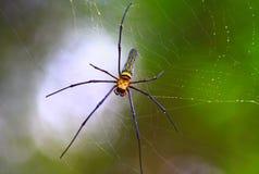 Eine Spinne und sein Web Lizenzfreie Stockbilder