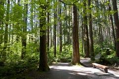 Eine Spur durch das Holz Lizenzfreies Stockbild