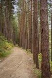 Eine Spur durch den Wald lizenzfreies stockfoto