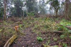 Eine Spur durch tropischen Regenwald zum Campingplatz Raung ist von alles Java Gebirgspfaden, ist auch eins von das schwierigste stockfotografie