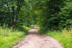 Eine Spur im Wald Stockbilder
