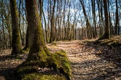 Eine Spur im Wald von Boppard stockbild