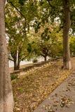 Eine Spur und Steinschritte im Park Lizenzfreie Stockfotografie
