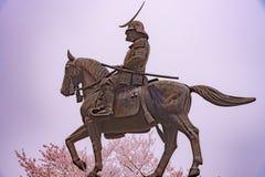 Eine Statue von Masamune Date zu Pferd Kirschblüte Sendai Castles, Aobayama-Park, Sendai, Miyagi, Japan in voller Blüte kommend stockbilder