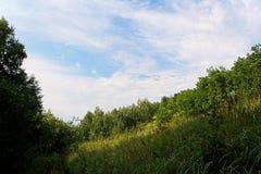 Eine steile Waldsteigung Stockbild