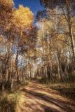 Eine Straße durch Aspen Trees Lizenzfreie Stockfotos