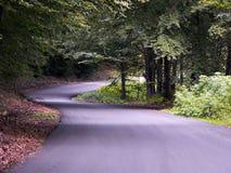 Eine Straße in einem schönen Wald Stockfotografie