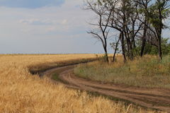 Eine Straße entlang dem Feld Lizenzfreie Stockbilder