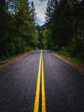 Eine Straße führt in einen üppigen Wald Stockfotografie