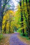 Eine Straße im Holz Stockfotos
