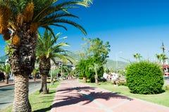 Eine Straße mit Palmen nahe dem Hafen von Alanya Stockfoto