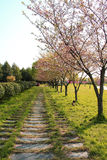 Eine Straße umgeben durch Gras stockfotos