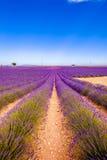 Eine Straße voll des Lavendels Stockfotos