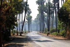 Eine Straße zwischen Palmen lizenzfreie stockbilder
