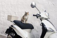 Eine Straßenkatze auf einen Roller in der Insel von Patmos, Griechenland lizenzfreie stockfotos