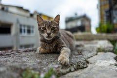 Eine Straßenkatze in Istanbul Lizenzfreie Stockfotos