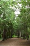 Eine Straße in einem Wald lizenzfreie stockfotografie