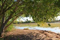 Eine Sumpfgebietansicht Lizenzfreies Stockbild