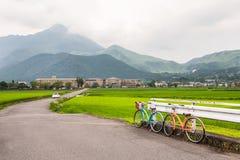 Eine Szene des grünen Reisfeldes kreuzte durch eine Landstraße Stockbild