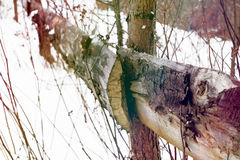 Eine Szene des verschneiten Winters mit fallendem Schnee von der Karpatenregion, Ukraine, Europa Stockbild