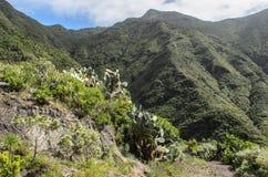Eine szenische Ansicht der felsigen Landschaft in anaga ländlichem Park, Teneriffa stockfotos