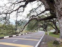 Eine szenische Straße mit der Reihe von raintrees nahe einem See stockfoto