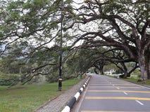 Eine szenische Straße mit der Reihe von raintrees nahe einem See lizenzfreie stockfotografie