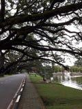 Eine szenische Straße mit der Reihe von raintrees nahe einem See stockfotos