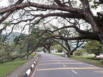 Eine szenische Straße mit der Reihe von raintrees nahe einem See lizenzfreie stockbilder