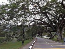 Eine szenische Straße mit der Reihe von raintrees nahe einem See stockfotografie