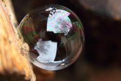 Eine tadellos runde Blase, die auf der Seite etwas Holzes stillsteht lizenzfreie stockfotos