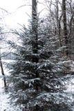 Eine Tanne bedeckt im Schnee in einem deutschen Wald im Winter stockbilder