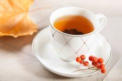 Eine Tasse Tee mit fallendem Herbstlaub des Ahorns und ein Bündel der Eberesche Stockbilder