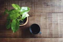 Eine Tasse Tee und eine Anlage auf einer Tabelle Stockbilder