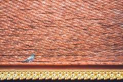Eine Taube Lizenzfreie Stockfotografie