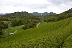 Eine Teeplantage Lizenzfreie Stockfotografie