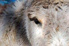 Eine teilweise Mündung eines Esels lizenzfreies stockfoto