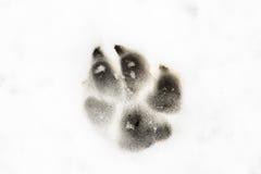 Eine Tierbahn im Schnee Stockfoto