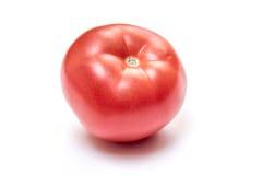 Eine Tomate Lizenzfreie Stockbilder