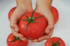 Eine Tomate in den Palmen Stockfotos