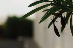 Eine tote Blumenknospe hängt von einer Niederlassung lizenzfreie stockfotografie