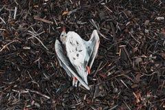 Eine tote Seemöwe liegt auf dem Rückstand, ein Stück Holz vom Meer Das Konzept der Verschmutzung stockbilder