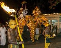 Eine Tusker-Gruppe führt durch die Straßen von Kandy während des Esala Perahara in Sri Lanka vor Lizenzfreie Stockfotos
