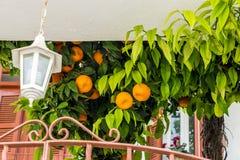 Eine typische Ansicht in das traditionelle Dorf Omodos in Zypern lizenzfreie stockbilder
