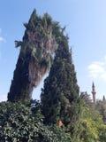 Eine Umarmung von Bäumen stockbild