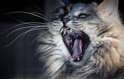 Eine verärgerte Katze? Stockbild