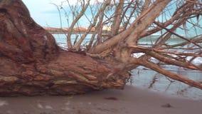 Eine Verminderung auf dem Ufer des Meeres bis zum Tag stock footage