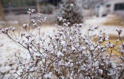 Eine verwelkte Blume bedeckt mit Schnee stockfotos